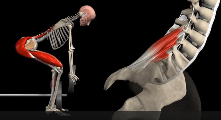 Haltérophilie et courbe lombaire