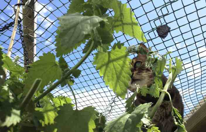 cat finds hanging catnip basket