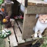 Jimmy the cat near plants