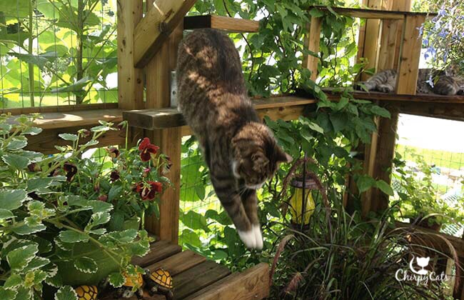 Agile paws landingIs Summer gone already?Spring into Autumn