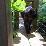Tortoiseshell cat walks though the tunnel garden