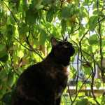 Scout the cat loves the vine