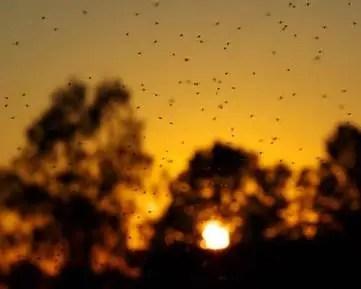 Шестте най-дразнещи насекоми, които обичат топлото време