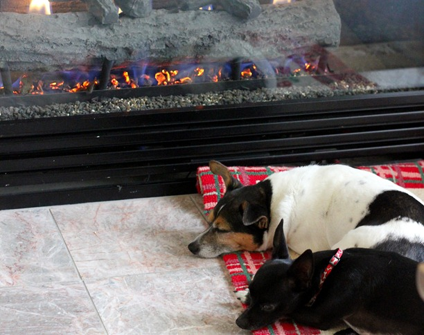 dogs fire