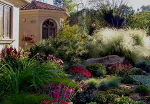 Ornamental grasses are romantic highlights