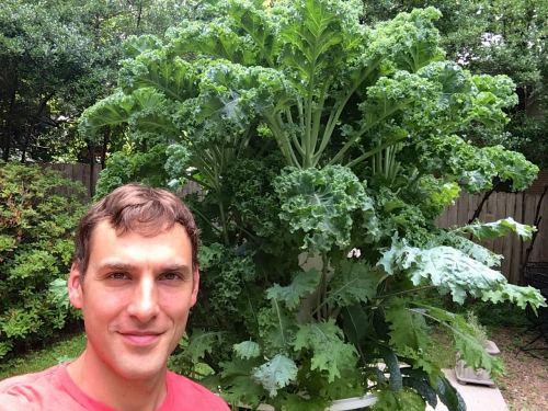 Tower Garden Chris Wark