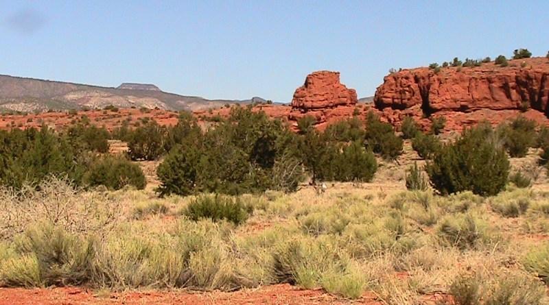 desert brush & red rocks