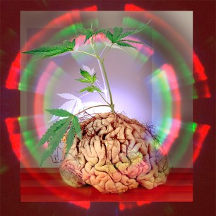 THC in the brain