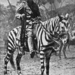 Camo pony, British Cavalry WW1 East Africa