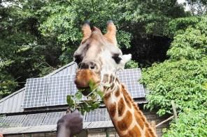 Nairobi: Giraffes, Rafting, Tea & so much more