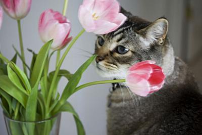 roux-tulipasrosas_3S.jpg
