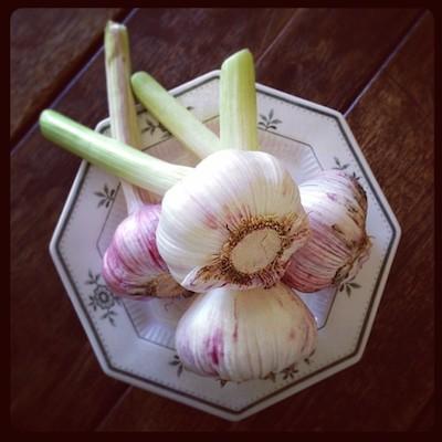 fresh-garlic.jpg