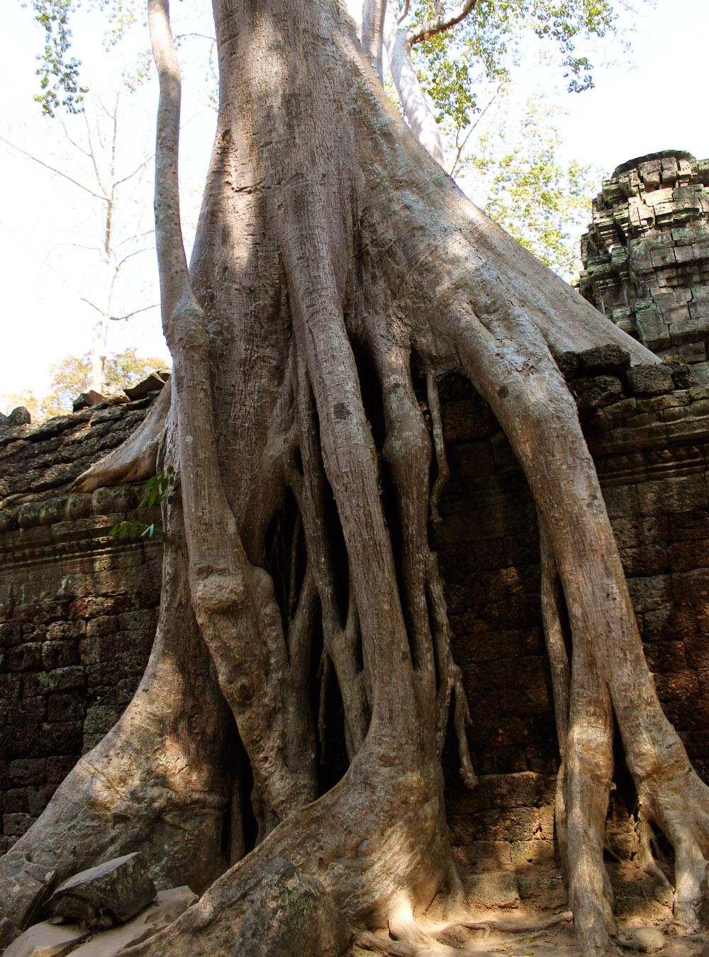 Ta Prohm Siem Reap Cambodia-14