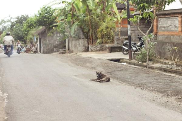 Bali Bike Baik Tours-63
