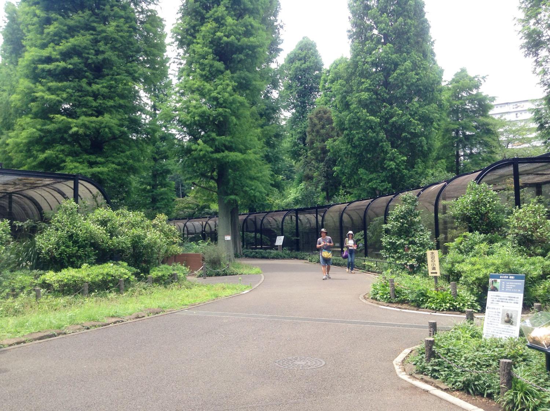 Inokashira Park Zoo-13