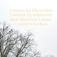 I Wanna Be Like A Bird