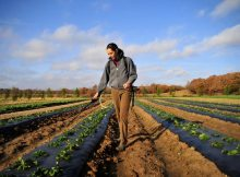 bando_ismea_giovani_agricoltura