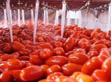 pomodori-pelati-lavorazione-lavaggio--672x351