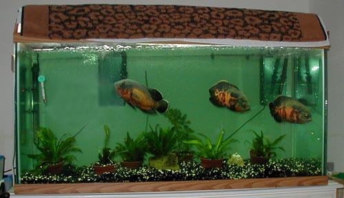 Fish tank decorations 80 gallon member spotlight on for 20 gallon fish tank decoration ideas