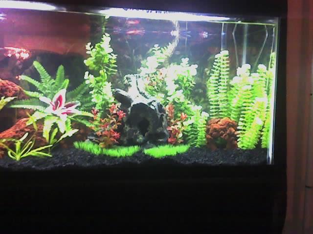 cichlids.com: Tank examples: Tropical Fish Tank For Cichlids 55 Gallon