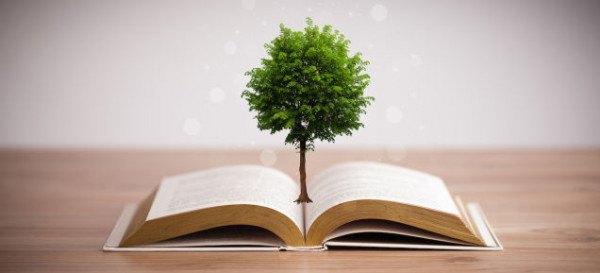 Productos  provenientes del árbol