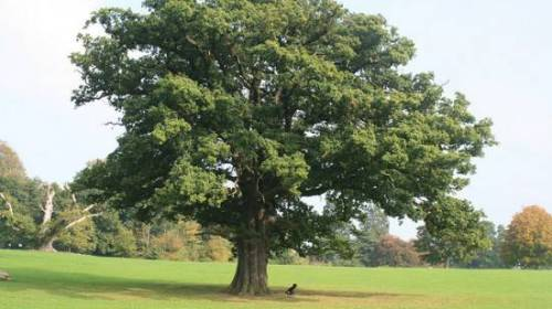 Clases de maderas – 4