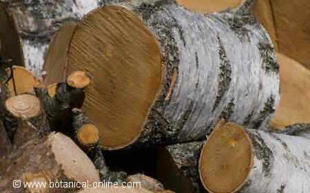 Clases de maderas – 5