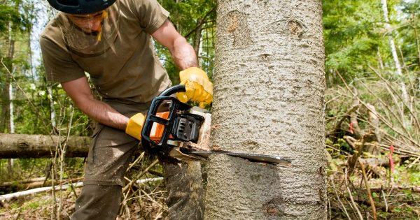 Proceso de obtención de la madera -1