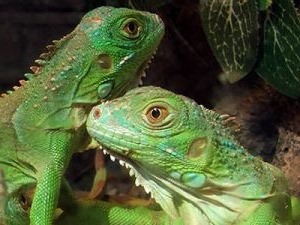 animal-compania-reptiles-mascota