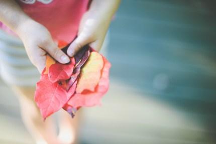 photographers Sydney - autumn leaves