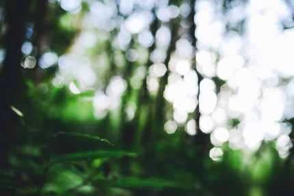 sydneyphotographers\trees