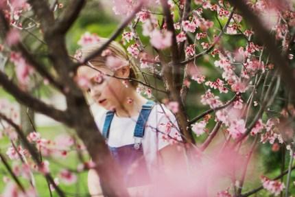 Sydney Photographer: spring blooms