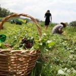 WWF: manuale di bon ton in natura, anche d'estate
