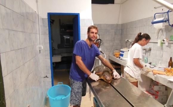 La tartaruga salvata dai volontari di Linosa