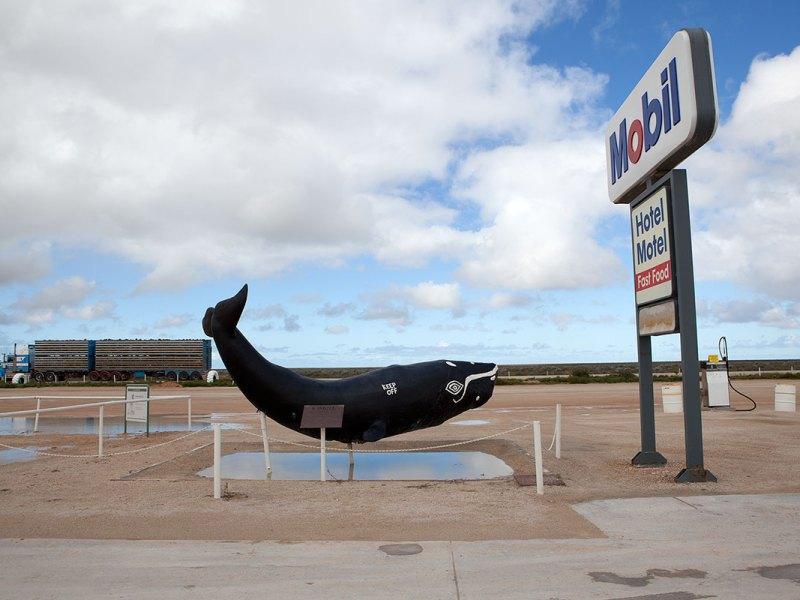 Nullarbor Whale