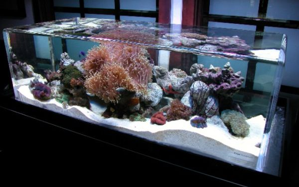 Furniture: Unique Salt Water Fish Tanks Can Mimic The Ocean Bed To