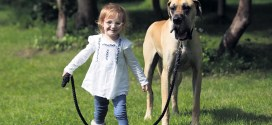 Killaloe hero sparks interest in Great Dane pups
