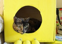 Cats, Cake and Coffee - a review of Leicester's first cat cafe on Francis Street, Stoneygate, Leicester LE2, by Clarendon Spark