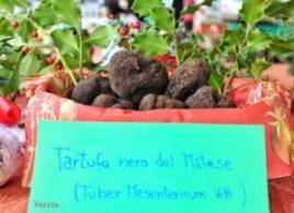 tartufo-del-matese-vetvin