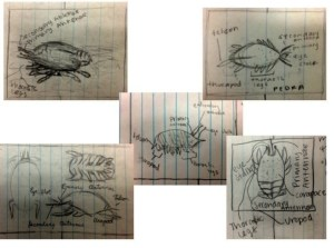 Figure 3. Labeled student sketches of sand crabs.  Photograph by Kepper