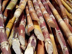 Sugarcane_Biomass