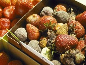 fruit-wastes