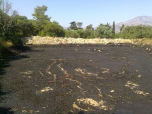 olive-mill-wastewater