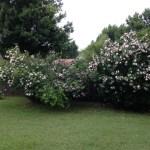 Norma Jean backyard Oklahoma