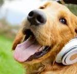 DogReggaeMusic1