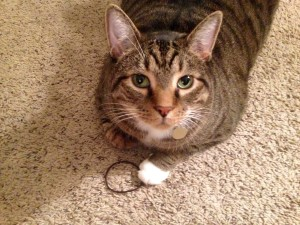 Entertaining myself with my favorite toy—Mom's hair tie