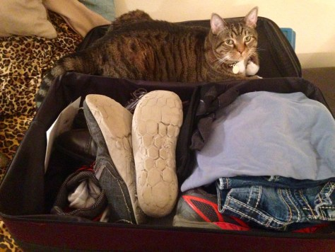 I'm in the suitcase. They can't leave again without taking me with them.