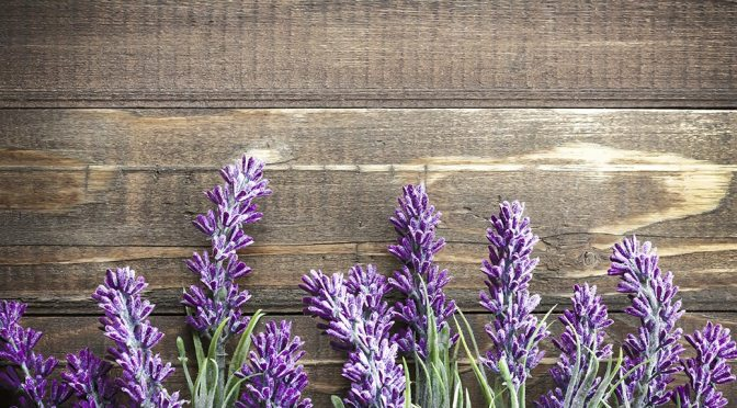 Planting Lavender – Alan Titchmarsh tips