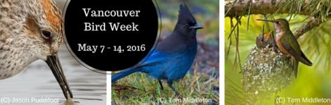 Vancouver Bird Week