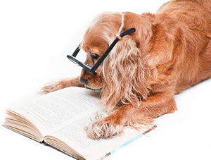 Dog Training - Obedience, CGC, Tricks, & More!